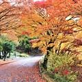 Photos: 紅葉の参道