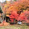 Photos: 中庭の紅葉