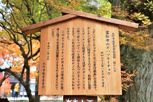 霊松寺オハツキイチョウ説明