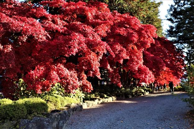 Photos: 真赤な紅葉