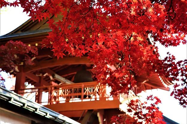 Photos: 鐘楼山門と血染めの紅葉