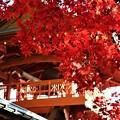 鐘楼山門と血染めの紅葉