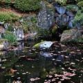 Photos: 庭園の池
