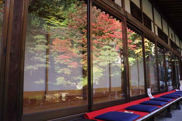 ガラス戸に映る紅葉