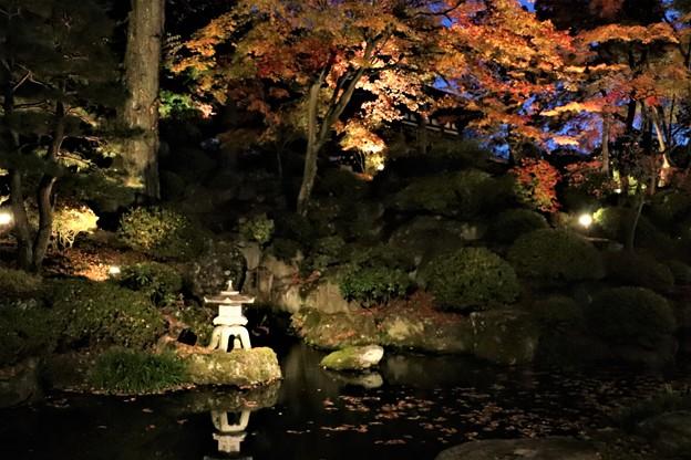 ライトに照らされた庭園池