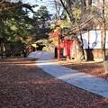 Photos: 落葉の散策路
