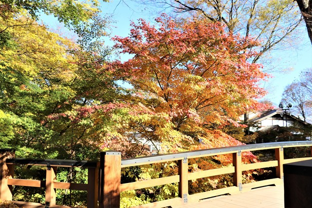 黒門橋の紅葉