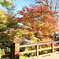 Photos: 黒門橋の紅葉