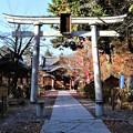 Photos: 懐古神社参道