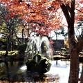 Photos: 池の噴水