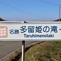 名勝・多留姫の滝