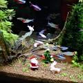 Photos: トロピカルクリスマス