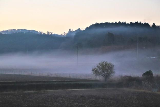 早朝の朝霧