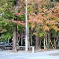 参道脇の紅葉