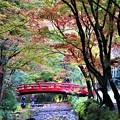 Photos: 紅葉トンネルと太鼓橋