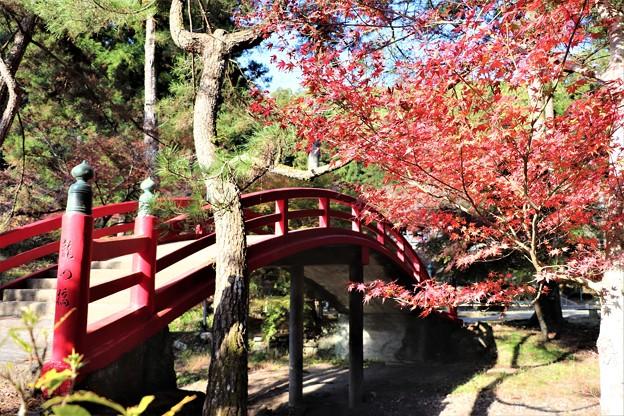 赤い太鼓橋と紅葉