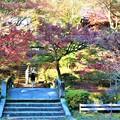Photos: 参道階段
