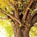 Photos: 枝は水平方向に