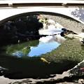 Photos: 庭園池