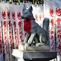 Photos: 千本幟と奉納狐