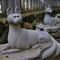 Photos: 親子狐