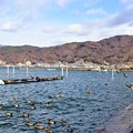 Photos: 諏訪湖の鴨達