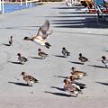 Photos: 鴨の日向ぼっこ