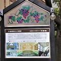 Photos: 国重要文化財指定「片倉館」