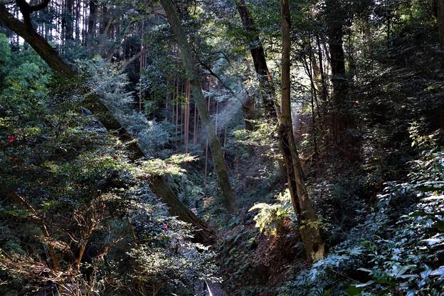 自然林の覆われ