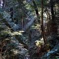 Photos: 自然林の覆われ