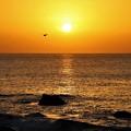 Photos: 大平洋