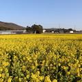 Photos: 菜の花浪漫街道