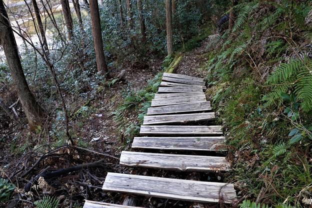 見物散策木道