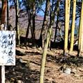 Photos: 「竹林に黄金の花咲く福寿草」標