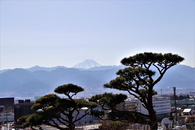 松と富士山