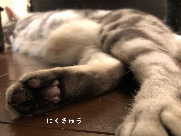 Photos: IMG_5977