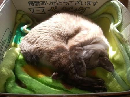 猫らしい寝相