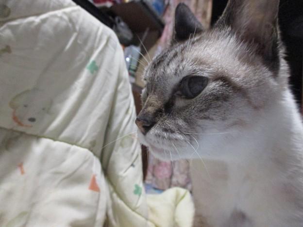 Photos: 春菊さん朝のひとコマ