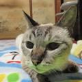 春菊さん ♀ 20歳と3ヶ月