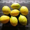 Photos: レモン