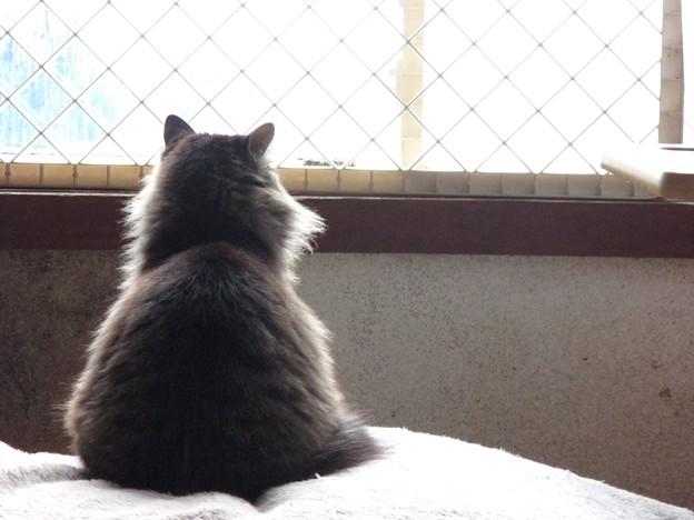 Photos: 雪見猫