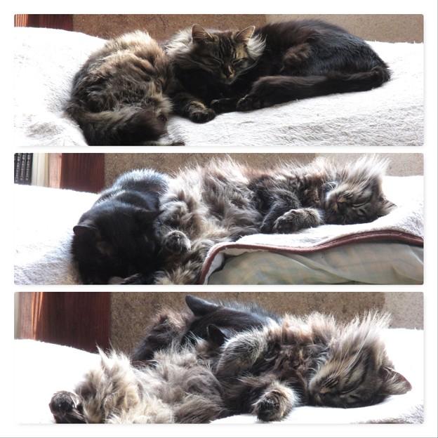 Photos: 寝相悪し