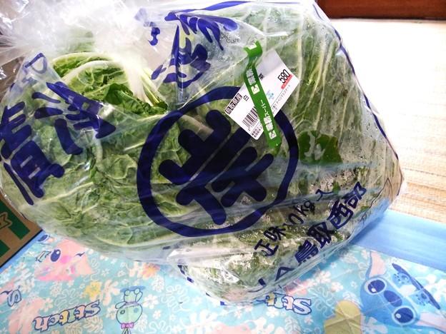 白菜4玉10キロ