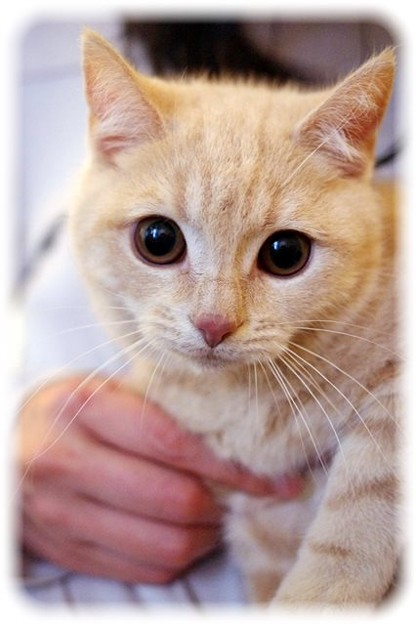 ようこそ子猫様!