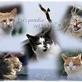 MISAKI Cats Paradise