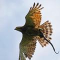 写真: 蛇FLY