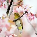 写真: 今日の春トレ