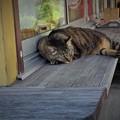 Photos: 猫日和