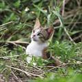 写真: 島猫
