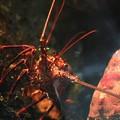 写真: エビラの逆襲